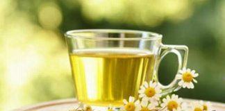 Hoa cúc trắng chữa hoa mắt, chóng mặt-1